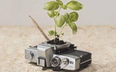Lápiz con semilla Sprout